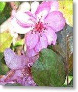 Apple Blossom II Ab2wc Metal Print