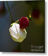 Apple Blossom Time Metal Print by Mitch Shindelbower