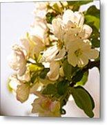 Apple Blossoms 9 Metal Print
