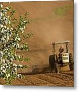 Apple Blossoms And Farmer On Tractor Metal Print