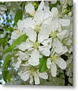 Apple Blossoms On The Trail Metal Print