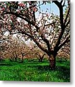 Apple Orchard, Co Armagh, Ireland Metal Print