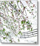 Apple Tree In Bloom With Spring Snow Metal Print