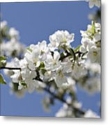Apple Trees In Full Bloom Metal Print