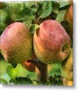 Apples Painterly Metal Print