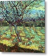 Apricot Trees In Blossom Metal Print by Pg Reproductions