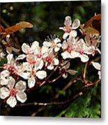 April Plum Blossom Metal Print