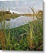 Arcata Marsh Metal Print