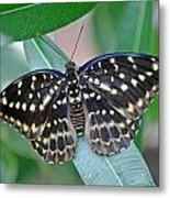Archduke Butterfly Metal Print