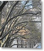 Arched Trees Metal Print