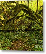 Arches In The Rainforest Metal Print