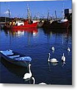 Ardglass, Co Down, Ireland Swans Near Metal Print