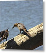 Are You Gonna Eat That? Metal Print