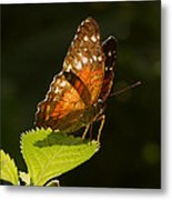 Are You Looking At Me? Metal Print