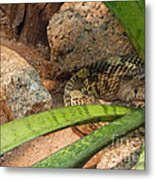Arizona Rattler Metal Print