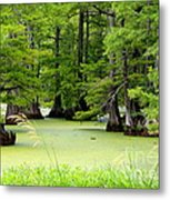 Arkansas Lake With Cypresses Metal Print