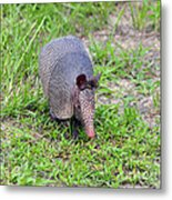 Armored Armadillo 01 Metal Print