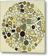 Arrangement Of Diatoms Metal Print