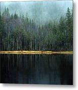Arrow-straight Evergreens Are Reflected Metal Print