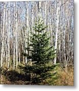 As Lonely As A Tree Metal Print