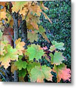 As The Leaves Turn Metal Print
