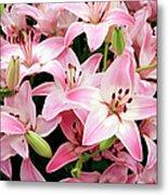 Asiatic Lily (lilium 'vermeer') Metal Print