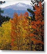 Aspen Grove And Pikes Peak Metal Print