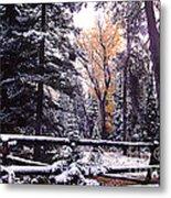 Aspen In Snow Metal Print by Barry Shaffer