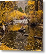 Aspen Leaves On Stream Metal Print