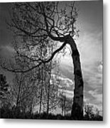 Aspen Silhouette Metal Print