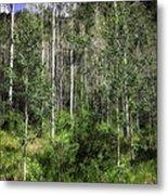 Aspen Trees - Vail Metal Print