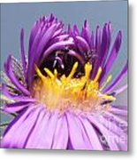 Asters Starting To Bloom Close-up Metal Print
