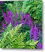 Astilbe And Ferns Metal Print