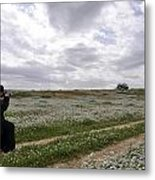 At Lachish Anemone Fields Metal Print