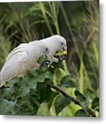 At The Dinner Table Metal Print