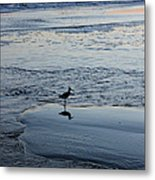 At Twilight Metal Print by Suzanne Gaff