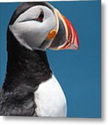 Atlantic Puffin Metal Print