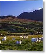Aughrim Hill, Mourne Mountains, County Metal Print