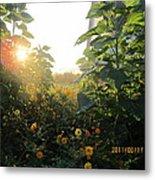 August Sunrise In The Garden Metal Print
