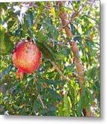 Aunt Tissy's Pomegranate Tree  Metal Print