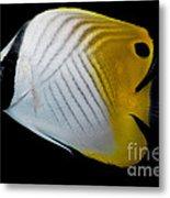 Auriga Butterfly Fish Metal Print
