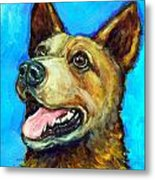 Australian Cattle Dog   Red Heeler  On Blue Metal Print