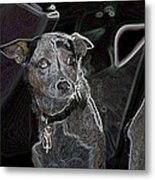 Australian Cattle Dog Sheltie Mix Metal Print