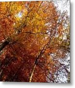 Autum Colours Metal Print