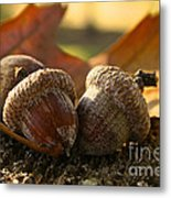 Autumn Acorns Metal Print