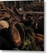 Autumn And Acorns Metal Print