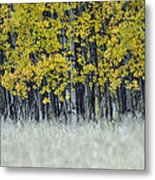 Autumn Aspen Grove Near Glacier National Park Metal Print
