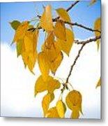Autumn Aspen Leaves Metal Print