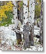 Autumn Aspens And Snow Metal Print