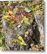 Autumn Berries And Leaves  Metal Print